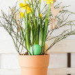 Easter eggs and narcissus — Stock Photo