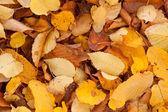 Dry leaf on ground — Stock Photo