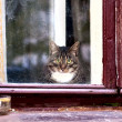 Cat looks outside from window — Stock Photo #13628764