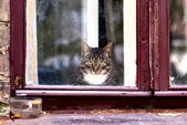 Cat looks outside from window — Stock Photo