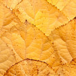 Background of leaves — Stock Photo