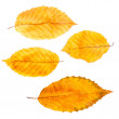Collection autumn leaves — Stock Photo