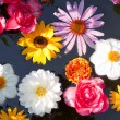Flowers floating in a pond — Stock Photo
