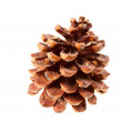 Dry brown Pine cone — Stock Photo #14075242