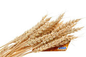 Stalks of wheat ears and credit card — Stock Photo
