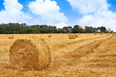 Harvested field — Stock Photo