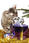 Curious cat unpacks Christmas gift — Stock Photo