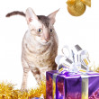 Cat looks at Christmas gift — Stock Photo