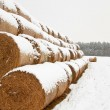 Straw Fodder Bales in Winter — Stock Photo #17194433