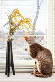 Cat looking outside — Stock Photo