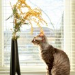 Cat looking on vase — Stock Photo #22458909