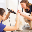 Fox terrier getting his hair cut — Stock Photo #22826236