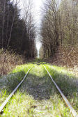 Narrow Gauge in forest — Stock Photo