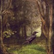 Stock Photo: Raven in forest