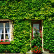 Old house covered by ivy in Paris, France — Stock Photo