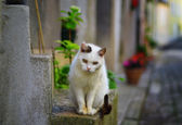 Beautiful white cat — Stock Photo