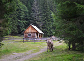 House of shepherds in the Ukrainian Carpathians — Stock Photo