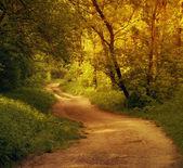 Bela floresta — Fotografia Stock