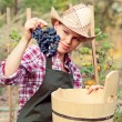 Stock Photo: Winemaker