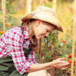 Stock Photo: Womgardener