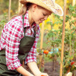 Womgardener — Stock Photo #32407141