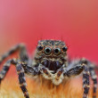 Hairy spider — Stock Photo #13781288