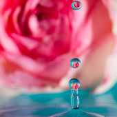 Eau de Rose — Stock Photo