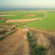 Stock Photo: Camino de santiago
