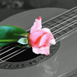 Guitar and carnation — Stock Photo