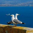 Stock Photo: Seagulls