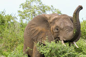 Elephant having lunch — Stock Photo