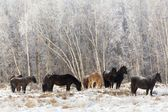 Animals Kamchatka — Stock fotografie