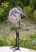 Great blue heron on a background of green grass — Stock Photo