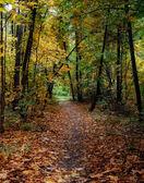 Kleuren van de herfst — Stockfoto