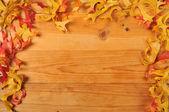 秋の葉の罫線 — ストック写真
