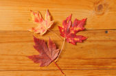 Aurumn leaf background — Stock Photo