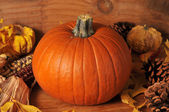 Harvest pumpkin — Stock Photo