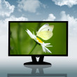 Lcd monitor television - Stock Photo