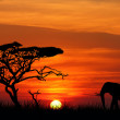Elephant at sunset - Stock Photo