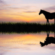 Horse at sunset - Stock Photo