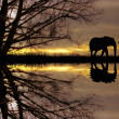 Elephant at sunset — Stock Photo