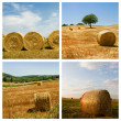Hayfield — Stock Photo
