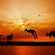 Kangaroos at sunset — Stock Photo #15378625