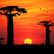 Stock Photo: Baobab at sunset
