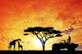Jeep safari — Stok fotoğraf