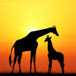 Giraffe at sunset - Stok fotoğraf