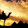 Pyramids in Egypt — Stock Photo #18842041