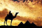 Пирамиды в Египте — Стоковое фото