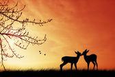 Deers silhouette — Stock Photo