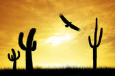 Eagle silhouette — Stock Photo